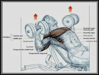dumbbell-incline-press-hareketi