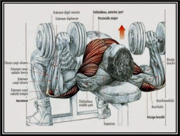 dumbbell-press-hareketi