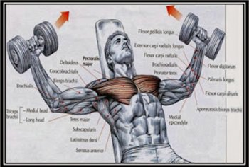 incline-dumbbell-fly-hareketi