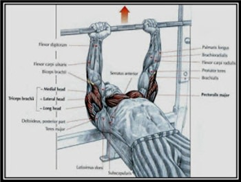 medium-grip-bench-press-hareketi